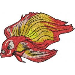 Pica-pau 0023