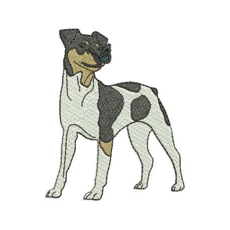 Cão 74
