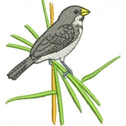 Pássaro 05
