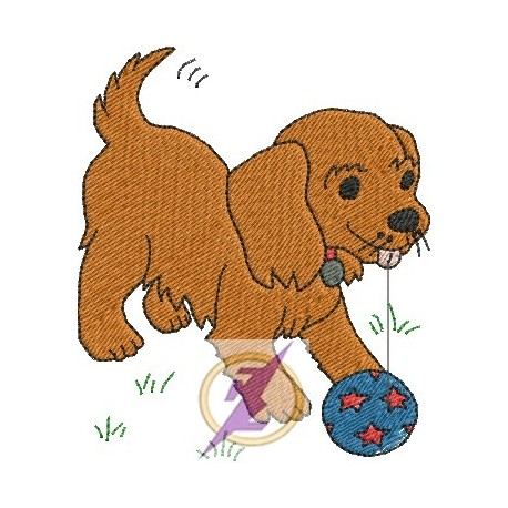 Cão 12