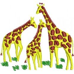 Girafa 14