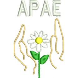 APAE 02